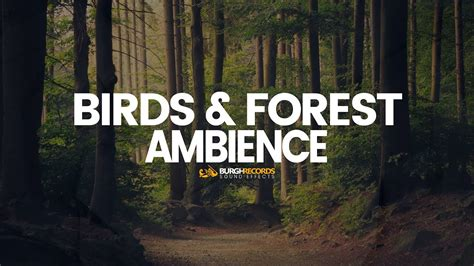 birds forest ambience nature sound effects