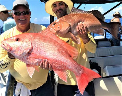 snapper grouper nearshore seeing