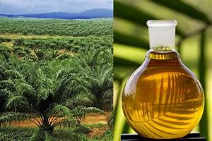 Turbo Qui Fuit De L Huile : l huile de palme une huile qui fait d bat blog omum ~ Gottalentnigeria.com Avis de Voitures