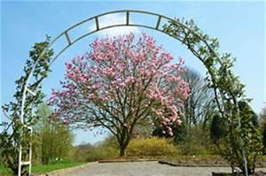 Magnolie Im Topf : magnolie pflanzen schritt f r schritt anleitung ~ Lizthompson.info Haus und Dekorationen
