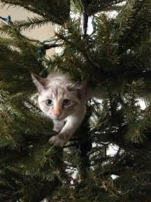 Gatti che aiutano a decorare l albero di natale ziqqurat