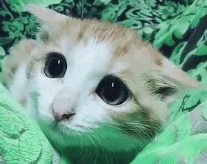 Sad Cat GIFs ~ Browse, Copy, & Share for Free