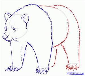 Step 14. How to Draw Grizzly Bears