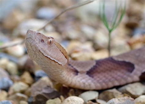 Be prepared for snakes in spring and summer   Mississippi ...
