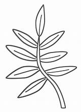 Coloring Branch Template Leaf Leaves Jungle Pages Plants Palm Branches Printable Tree Tropical Trees Plant Drawing Outline Colouring Clipart Clip sketch template