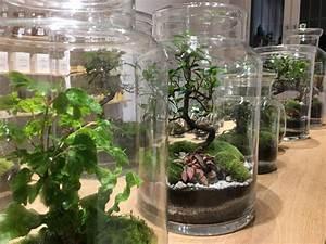 Bonsai Im Glas : greenlabs pflegeanleitung the golden rabbit beste gartenger te f r gartenliebhaber ~ Eleganceandgraceweddings.com Haus und Dekorationen