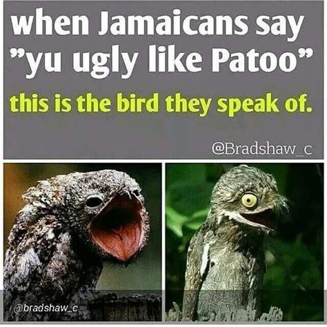 funny jamaican memes