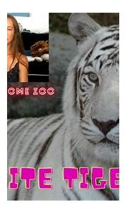 About White Tigers - White Tigers are Bengal Tigers ...