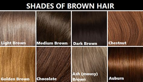 What Is The Difference Between And Brown Hair by Everything 4 Writers Brown And Hair Shades