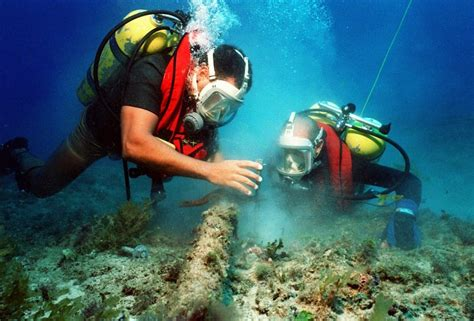 How to Become a Marine Biologist: Your Path to a Career ...