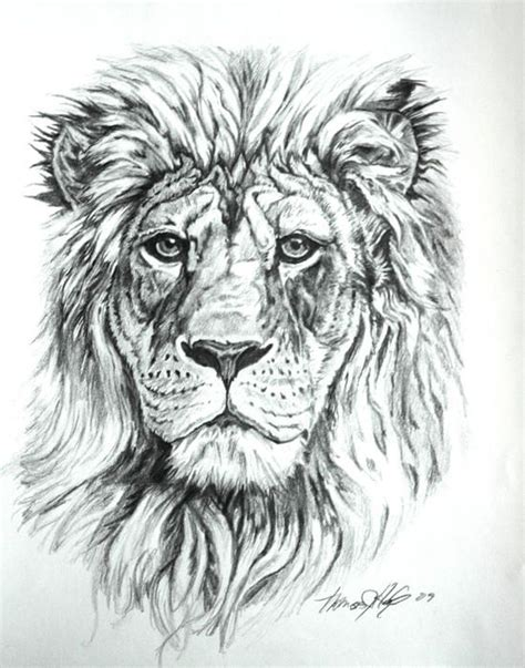 white lion tattoo designs images  pinterest
