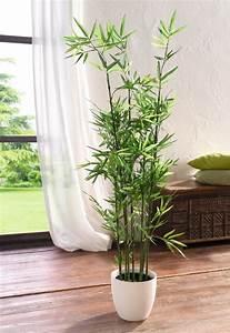 Bambus Als Zimmerpflanze : pflanze bambus ~ Eleganceandgraceweddings.com Haus und Dekorationen