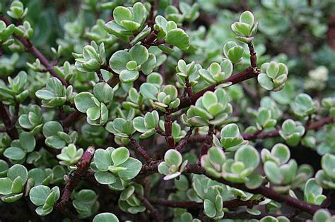 succulent plant identification images 10 best images about succulents i have on pinterest plant identification pictures of and