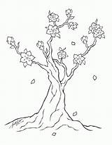 Blossom Cherry Tree Line Coloring Pages Deviantart Blossoms Chinese Drawings Printable Drawing Trees Popular Japanese Sketch Template Dragon 2008 Coloringhome sketch template