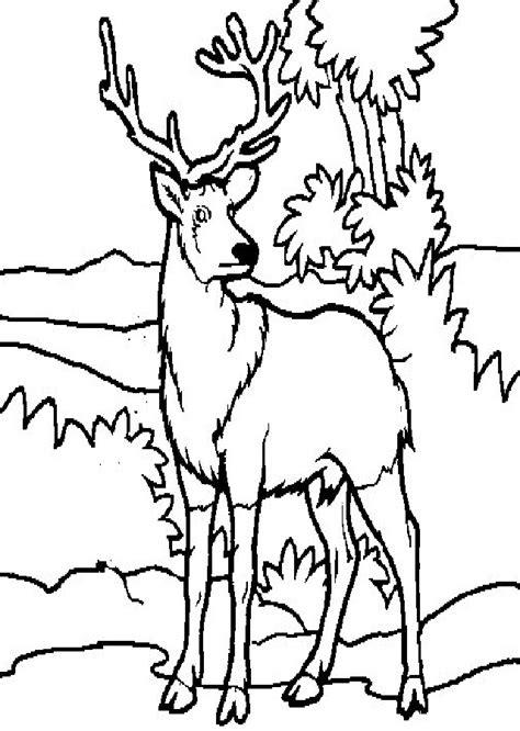 ciervo  colorear dibujos  colorear