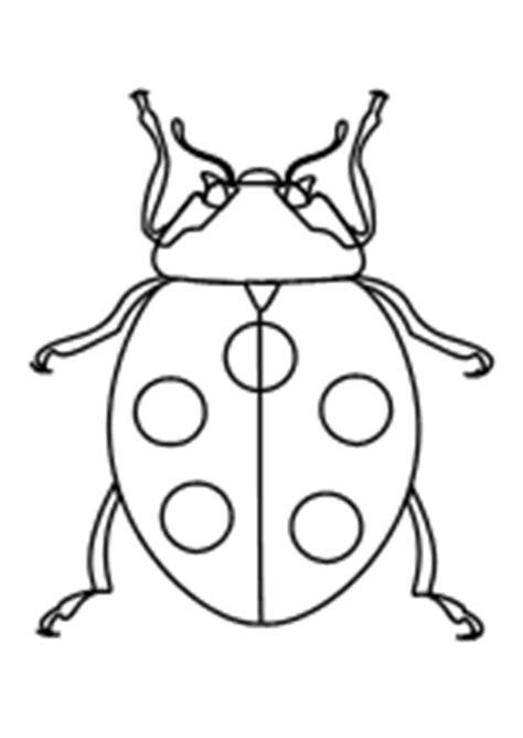 malvorlagen insekten schmetterlinge kaefer lustige