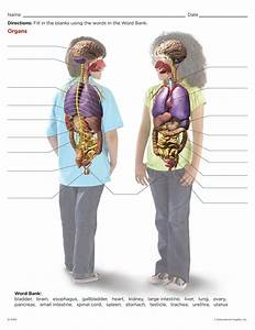Cool Worksheet For Kids To Learn The Major Organs  Find