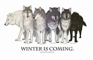 Game of Thrones, Winter is Coming, direwolf, Ghost, House ...