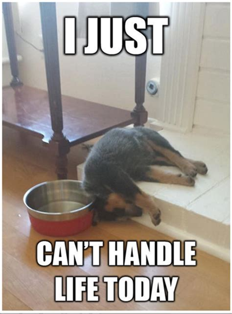 Tired Dog Meme - so tired memes image memes at relatably com