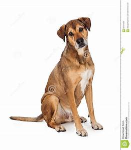 curious large mixed breed dog sitting stock photo image With looking for dog sitter