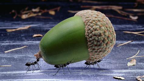 pflanzen gegen ameisen pflanzen gegen ameisen mittel gegen ameisen ganz ohne chemikalien garten news garten