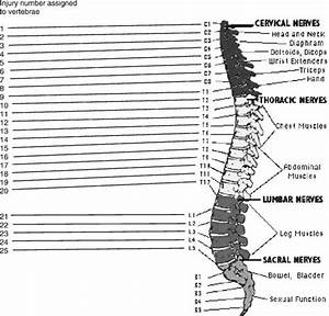 Neurological Level Of Spinal Cord Injury
