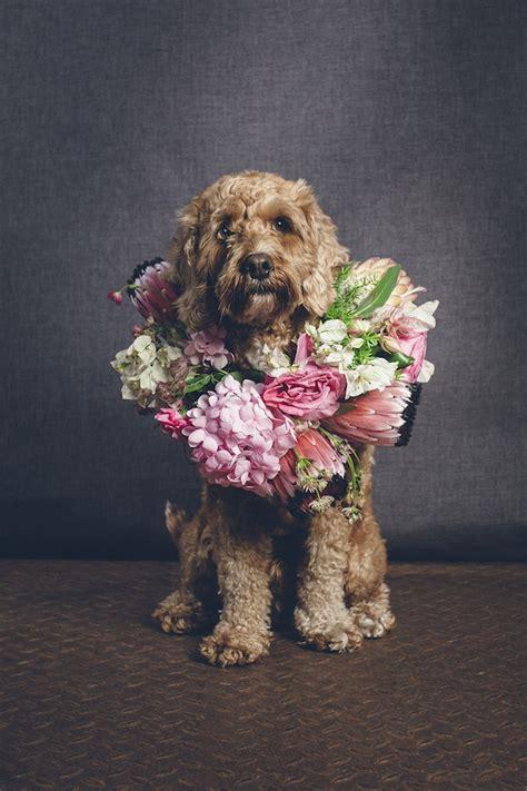 flower crowns  dogs wedding inspiration burnetts boards
