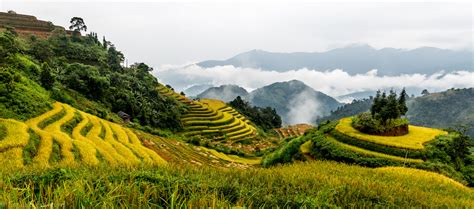 Ha Giang Terraced rice fields, North Vietnam | Rizières en ...