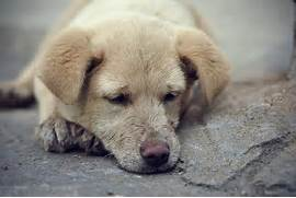 sad puppy sad puppy ey...Sad Puppy