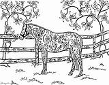 Coloring Horse Pretty Pasture sketch template