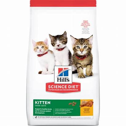 Kitten Dry Hill Science Diet Chicken Healthy