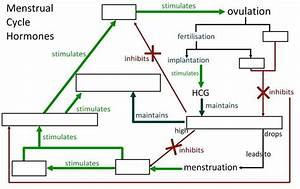 Human Female Reproductive System Parts Human Female