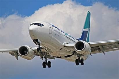 737 Boeing 700 Westjet Aircraft Birds Battle