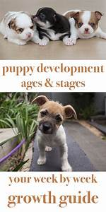 Puppy Development Stages With Growth Charts And Week By