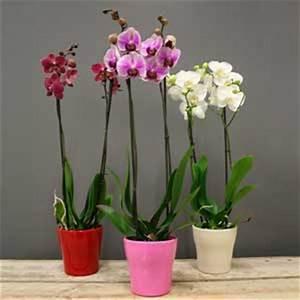 Comment Soigner Une Orchidée : comment soigner une orchid e phalaenopsis l 39 atelier des ~ Farleysfitness.com Idées de Décoration
