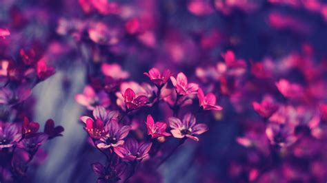 Full Hd Flowers Wallpapers ·① Wallpapertag