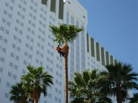Palm Tree Trimming « Affordable Tree Service, Las Vegas, Nv. Software Dashboard Design Press Releases Seo. Interesting Facts About Eating Disorders. Sonicwall Pci Compliance Montana Gold Bullets. International Advertising Agencies. Taking Out A Second Mortgage. Best Political Science Colleges. Psychology Washington University. Feeling Sad For No Reason Trade Schools In Va