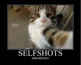 cat jokes for cat selfie cat cats humor meme www