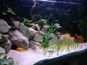 Optimale Aquarium Temperatur : lake malawi biotope aquarium the fish doctor ~ Yasmunasinghe.com Haus und Dekorationen