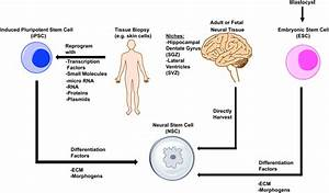 Neural Stem Cell Therapy For Subacute And Chronic Ischemic