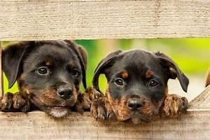 Was Machen Milben : hundemilben behandeln hausmittel gegen milben beim hund ~ Lizthompson.info Haus und Dekorationen