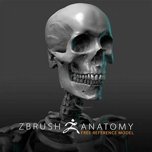 Free Skeleton Anatomy Reference Model  U2013 Pixologic  Zbrush Blog