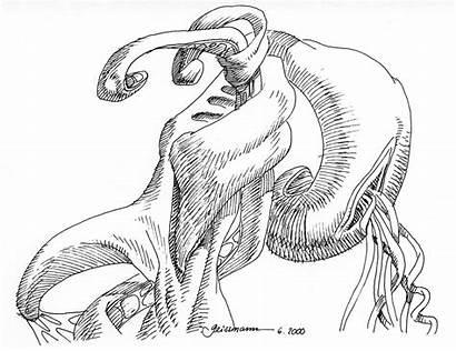 Drawing Fiction Organism Geissmann Thomas Getdrawings