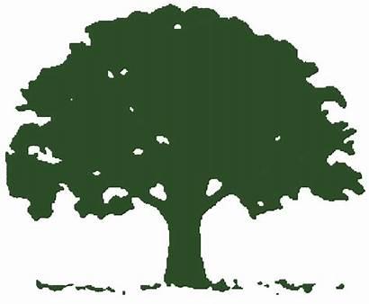 Tree Oak Clipart Landscaping Clip Poplar Logos