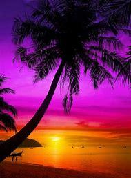 Tropical Beach Sunset Palm Tree Silhouette