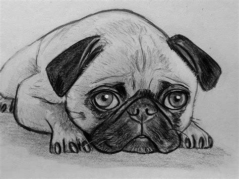 disegni a matita di ragazze tristi ritratto disegno schizzo carlino matita su carta