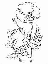 Poppy Coloring Poppies Flower Flowers Anzac Template Remembrance Colouring Printable Many Sheets Simple Drawings Drawing Templates Activities California Children Blank sketch template