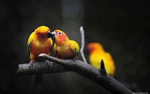 Download Download Wallpaper Of Love Birds Gallery