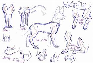Cat Anatomy Drawing At Getdrawings