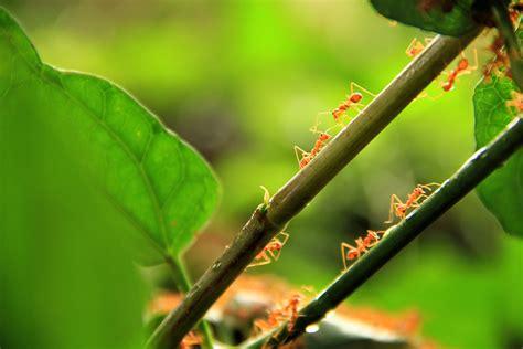 ameisen im beet ameisen im garten 187 so vertreiben sie sie mit gef 252 hl